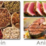 Banyak Protein Banyak Otot