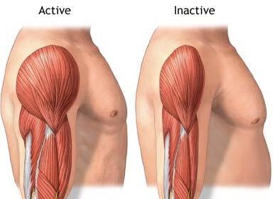 Rahasia Meningkatkan Massa Otot Bagi Pemula